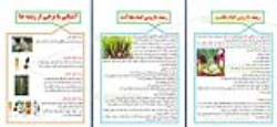 طرح جابربن حیان در مورد انواع ریشه ها